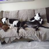 Doggie Daycare – Starting March 3rd 2015